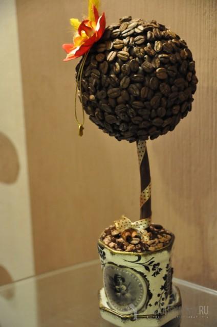 Кофейное дерево из зерна в домашних условиях 300